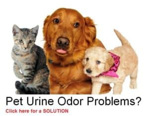 pet odor removal Northern VA