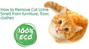 cat urine removal falls church va